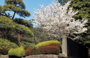2019-04-04 皇居 通り抜け (9)