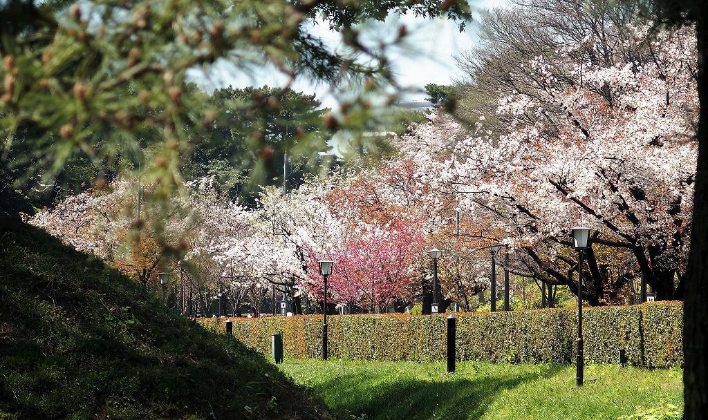 2019-04-04 皇居 通り抜け (25)