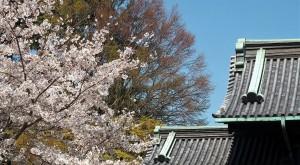 2019-04-04 皇居 通り抜け (23)