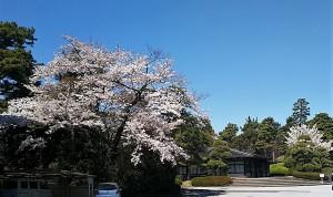 2019-04-04 皇居 通り抜け (8)
