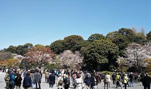 2019-04-04 皇居 通り抜け (6)
